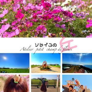 ■のびのび。秋桜