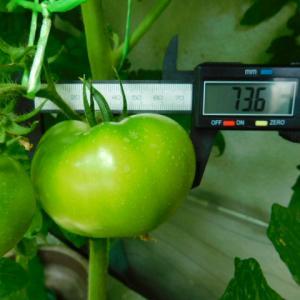 トマト&メロンの大きさ