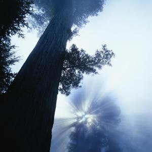 症状は枝葉。問題は樹の幹。