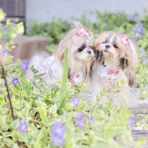 お花とあずきとよもぎ。