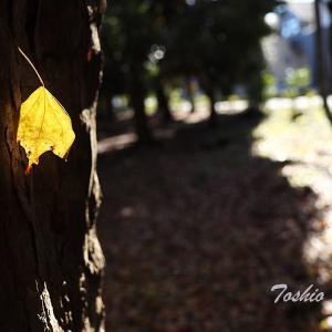 晩秋の輝き_Ver2