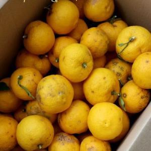 ◆柚子柚子柚子でジャムにポン酢に柚子味噌と化粧水♪