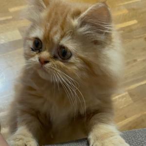 サプライズの子猫ちゃんプレゼント