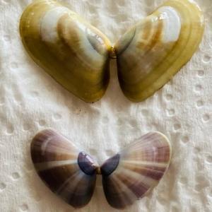 タコスランチと貝殻拾い