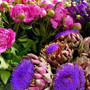 アーティーチョークの花