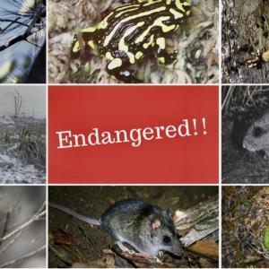 オーストラリア森林火災で絶滅の危機にある野生動物13種とは? 寄付先も紹介します
