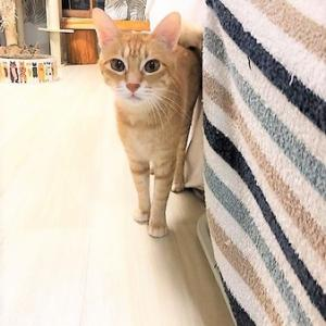 久米川みどり動物病院で保護猫の譲渡会