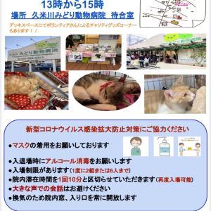 13日!久米川みどり動物病院で譲渡会です!