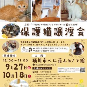 保護猫譲渡会☆樋川市べに花ふるさと館へGO‼️