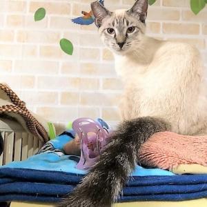 6日(日)保護猫☆譲渡会IN久米川みどり動物病院(東京都東村山市)&お願い