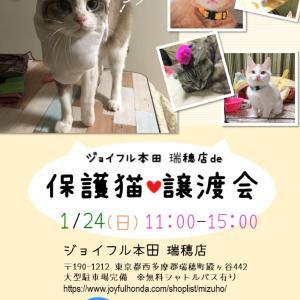 24日(日)ジョイフル本田瑞穂店で譲渡会!