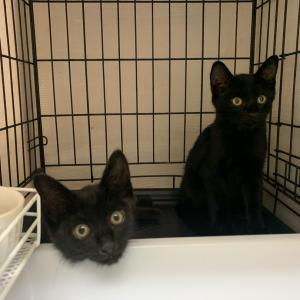 ここ最近の入室猫たち