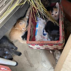 仔猫6兄妹