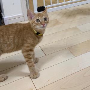 9月8日(日)セキチュー川越南古谷店☆犬猫譲渡会
