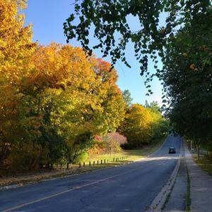 秋の紅葉.