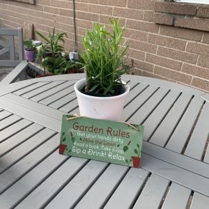 お庭の植物交換会してきました
