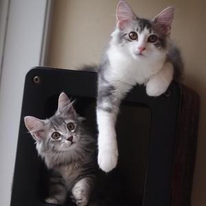 はるかの子猫たち成長記録更新しました!