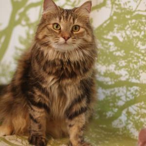 ビスコを子猫と一緒に迎えてくださる方を募集します。