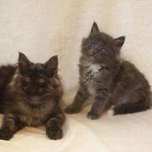 ポモ、エパル、まっくろくろすけ、まめざくらの子猫たち成長記録更新しました!