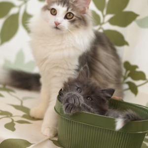 ポモ、エパル、まっくろくろすけ、まめざくらの子猫たちの成長記録を更新しました!