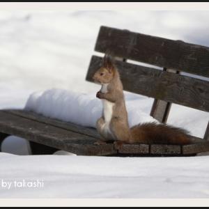 公園のベンチにひとり