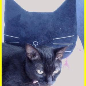 黒猫ダブル。