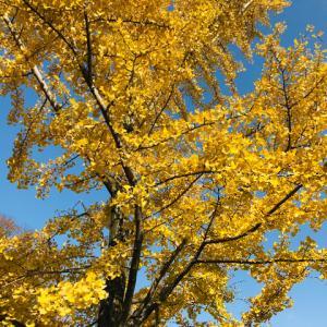 秋色を求めて…三ツ池公園へ。