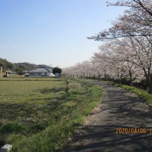 北谷川の桜を見に行きました。