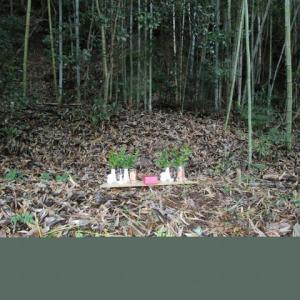 今日は裏山の『祇園さん』にお参りする日でした。