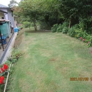 裏山の芝生を刈りました。