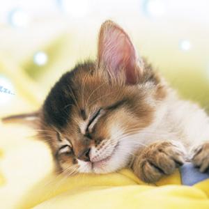「眠りを賜る主」