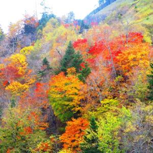 森の木々が歌っている(庶路ダム)