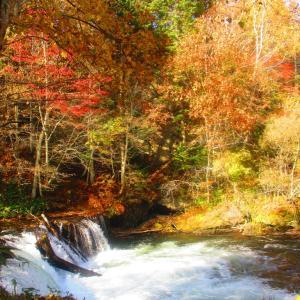 晩秋のさくらの滝