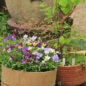 木桶の水槽