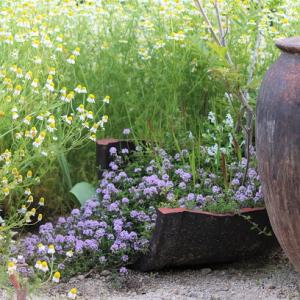 香りの植物