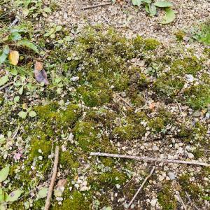【淡路暮らし】庭の畑計画。レタスを定植してみました♪