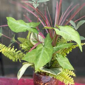 プランツギャザリング教室 観葉ガラスコップ植え 藤枝まちゼミにて開催