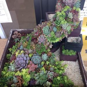 多肉植物寄せ植え作品コンテスト