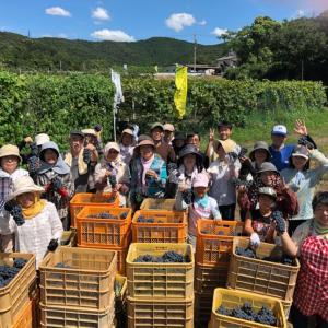 醸造用葡萄の収穫イベント