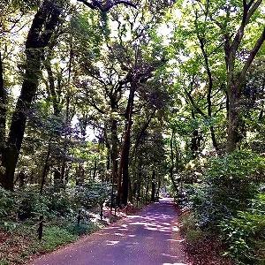 3693 【麺類色々400】残暑厳しき明治神宮の森と「タイ風冷やし寒天麺」