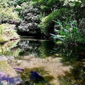 3696 【麺類色々401】少し涼しい清水の里で「蕎麦いなり」を・・深大寺
