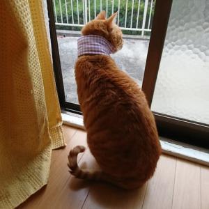 今日は寒い!
