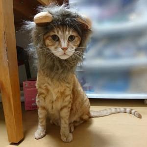 ライオン♪