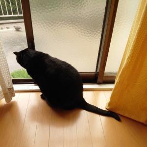 今日は雨。