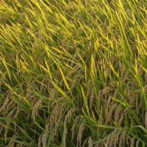 米農家、危機
