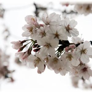 春になりましたねー