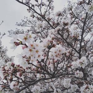4月の流れ