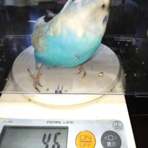 台風19号     体重測定
