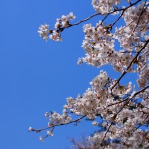 大分の春を満喫するの巻