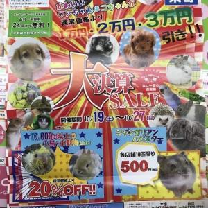 10/19決算大セール開幕!